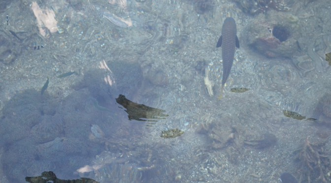 Como salmones nadando a contracorriente…